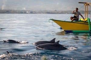dolphin tour lovina